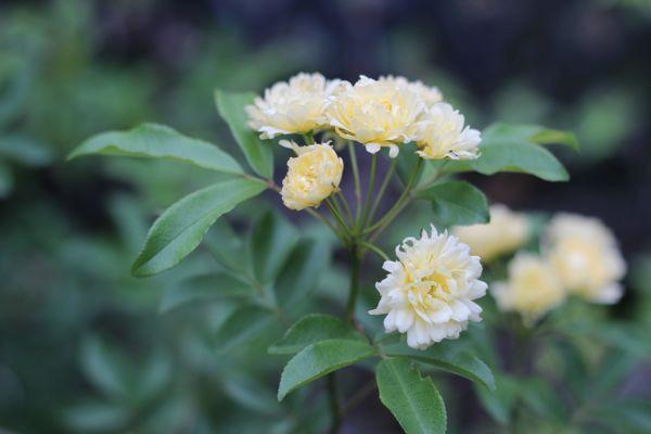 黄色の春の花