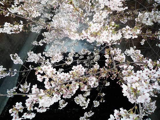 花見の写真