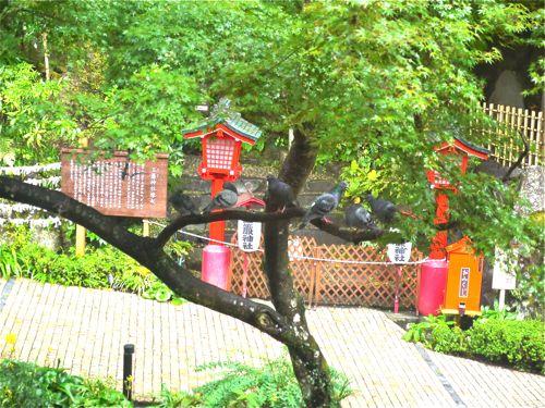 天成園の庭