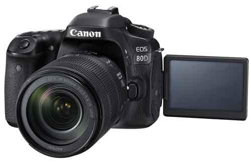 Canon EOS 80Dのライブビュー撮影の画像